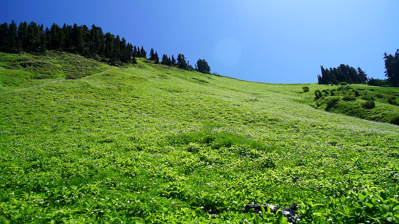 green alpine meadow